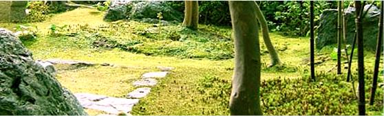 コケの育つ庭の育成_1