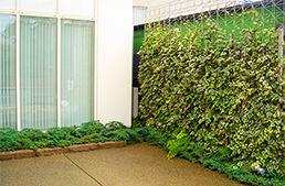 壁面緑化_1