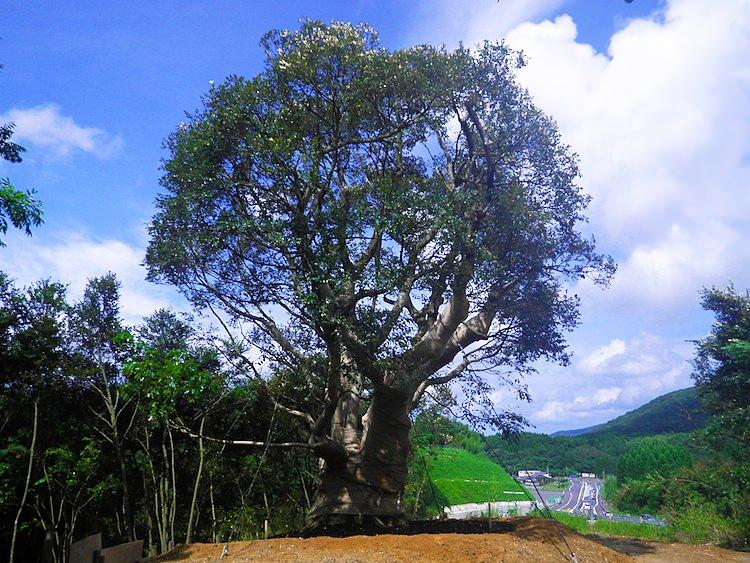 樹木養生保護タイトル画像