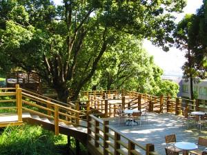 森のカフェタイトル画像