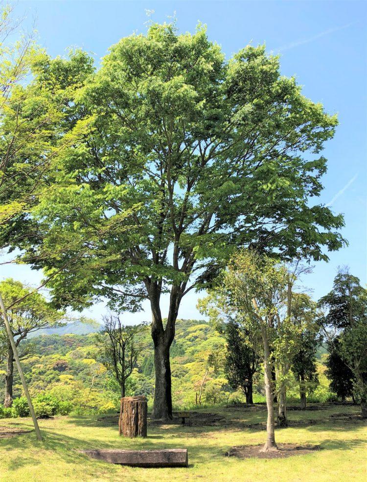 桂花園_1の画像